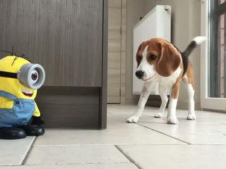 Funny Dogs VS The Minion!