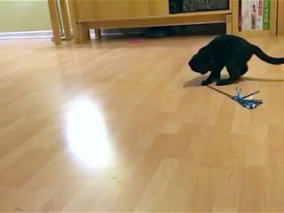Cat Spinning With Toy