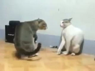Major Cat Fight !