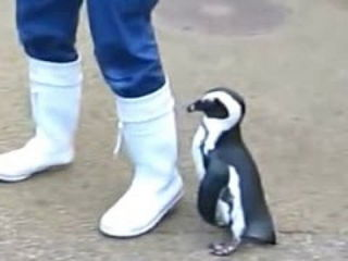 Penguins - A Cute And Funny Penguin Videos Compilation
