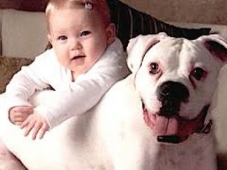 Funny Cats And Dogs Playing With Babies Compilation 2015