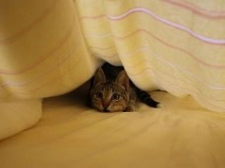 Funny Cats Playing Under Sheets Compilation 2015