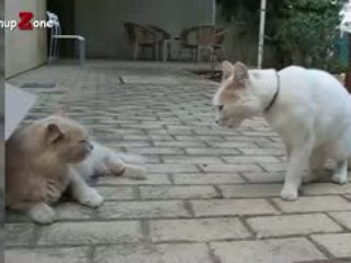 Funny Cats Arguing - Cats Talking To Each Other Compilation