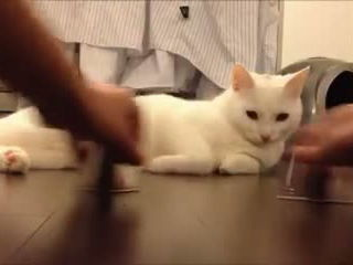 Super smart cat plays the shell game