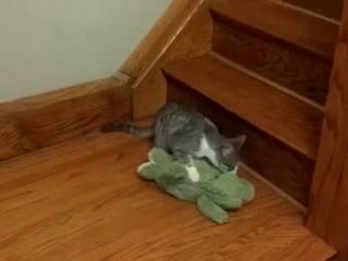 at wants to take his favorite crocodile toy upstairs