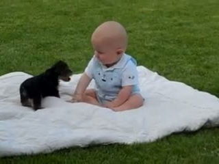 Puppy Attacks Baby