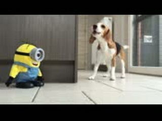 Funny Dogs VS Tumblin Stuart The Minion