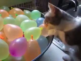 Funny Cat with Balloon