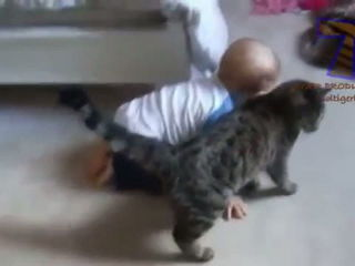 Funny cats annoying babies - Cute cat & baby compilation