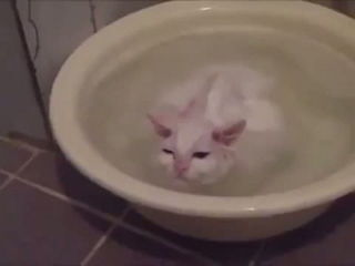 Funny Crazy Cats Playing in Water & Taking Baths - Funny Kitty Cats