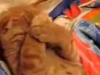 Cute orange lazy cat doesn't wanna wake up