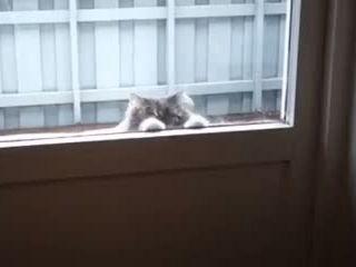 Is Anyone Home