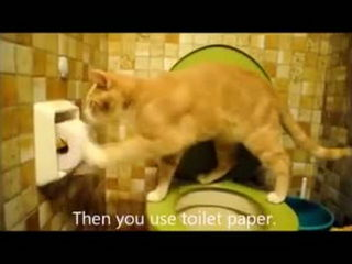 When Cat Use Toilet