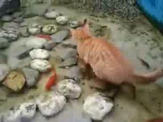 Cat Caught fish In The Pond