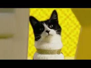 Cat Remix Dance