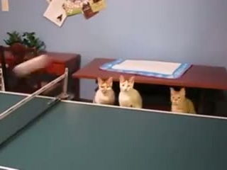 Funny ping pong cats