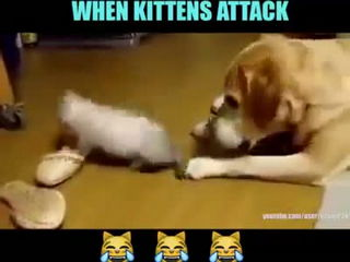 Adorable Funny Kittens