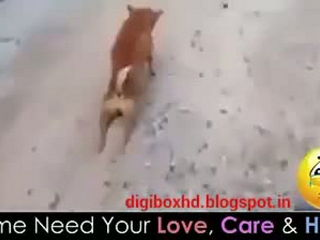 Funny Dog Making Fool Must See