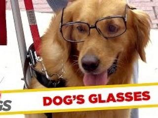 Dog Getting Its Geek On!
