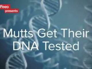 Rescue Dogs Get Their DNA Tested