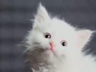 Cute Meowss Singing