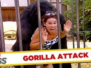 Gorilla Attack & Burnt Dollar Bill Pranks