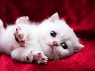 Funny Cute Baby Cat Videos