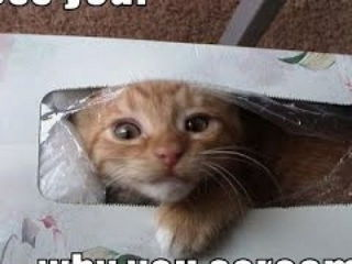 Best Funny Cats Fails Compilation