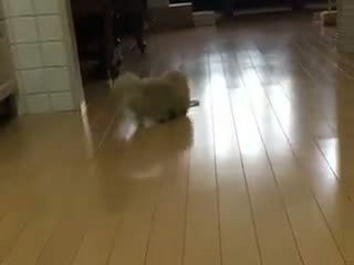 OMG! Look at those short legs!