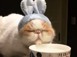 This 'bunny' can't decide if he's sleepy or thirsty