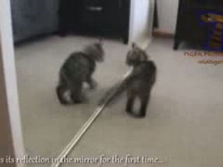 Kittens see do things for the first time - Funny and cute cat compilation