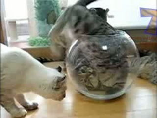 Funny cats vs fish tanks - Cute cat compilation