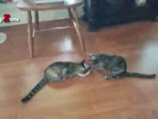 Funny Cats And Kittens Who Don't Want To Share Their Food Compilation