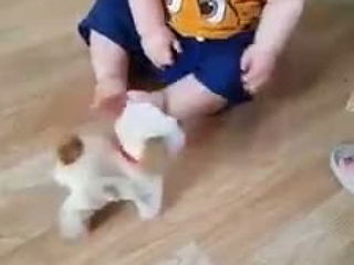 This adorable little guy loves his new toy!