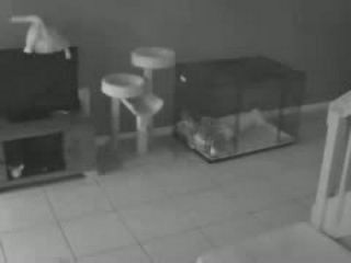 Funniest Security Camera Moments Of All Time