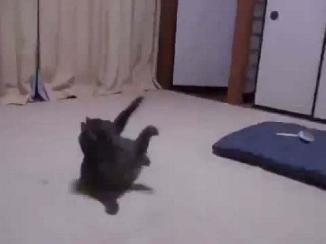 Funny Videos Fail Compilation Funny Pranks and Funny Cats