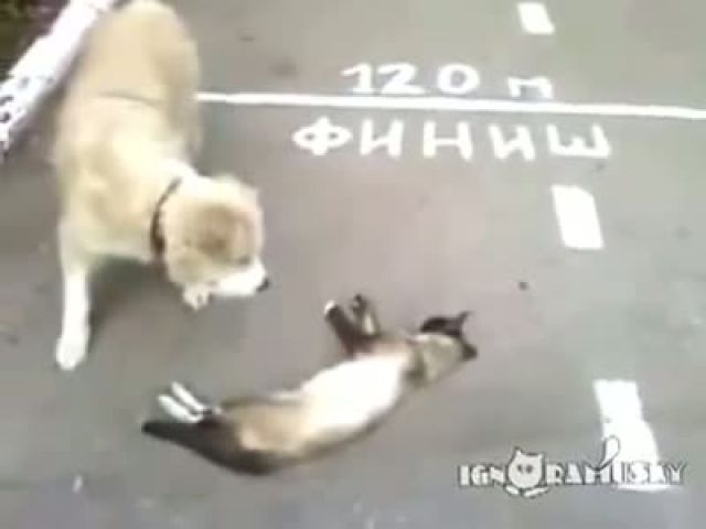 Too funny dog thought the cat was dead!