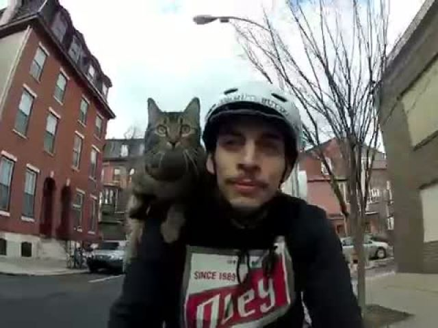 Cat Enjoying a Warm Winter Day Bike Ride