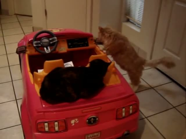 Cats fight over a pink Mustang