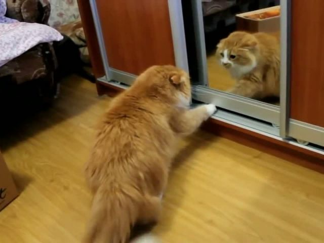 Fight with Himself in a Mirror