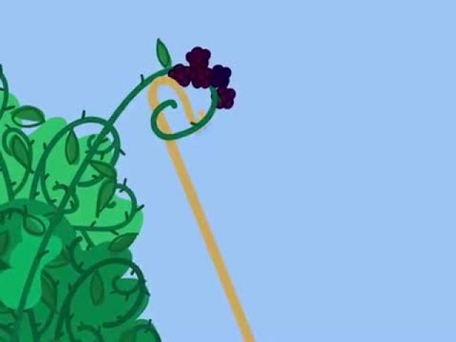 Peppa Pig - The Blackberry Bush