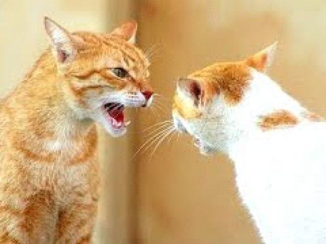 Funny Cats Arguing - Cats Talking To Each Other Compilation NEW HD