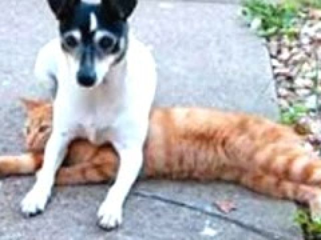 Best Of Funny Dogs Sitting On Cats Compilation