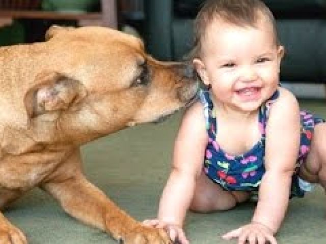 Funny And Cute Babies Laughing Hysterically At Dogs Compilation