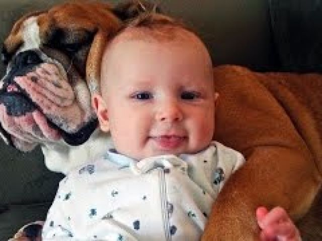Cute Cats and Dogs Love Babies Compilation 2016