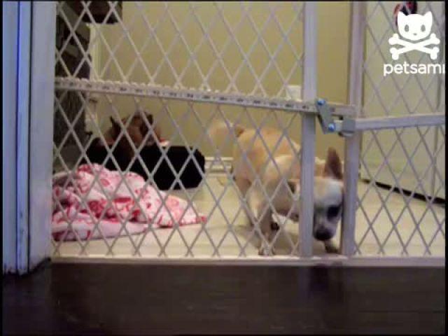 Puppy tries a daring escape