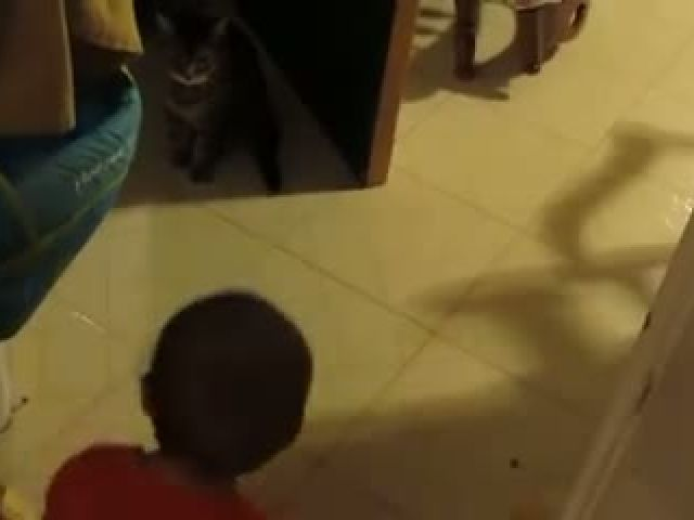 Cat Talk With baby