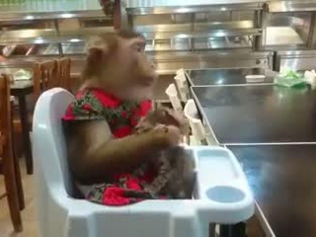 Monkey Loves Cat So Much
