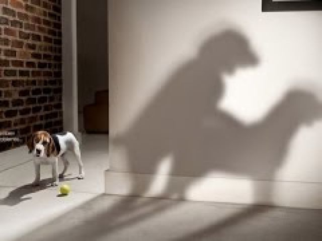 Top 10 Funny Dog Commercial