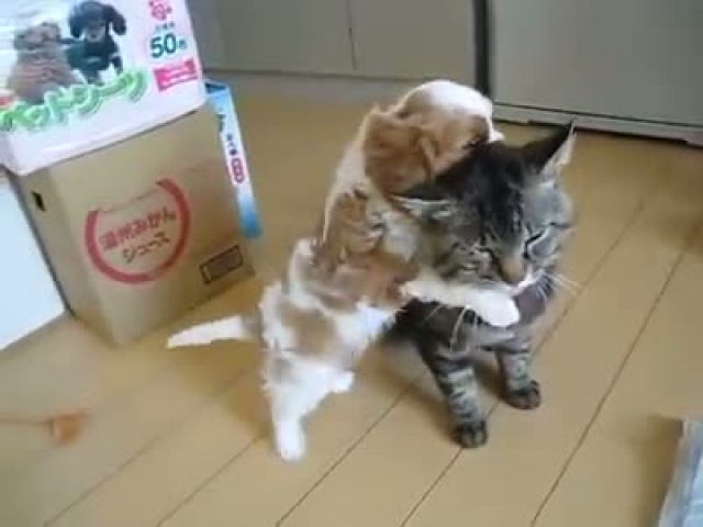 Funny Cat and Dog Play Together